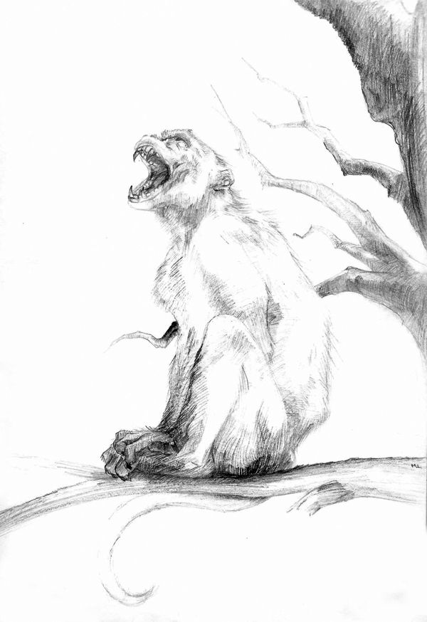 Monkeys! by Melissa Lamb, via Behance