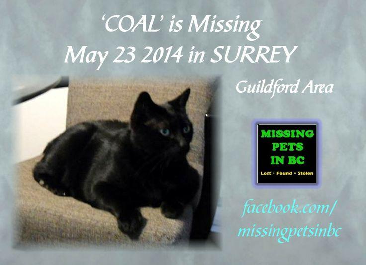 'COAL' MISSING MALE BLACK CAT in SURREY (150 between 104 & 108) MAY 23 2014