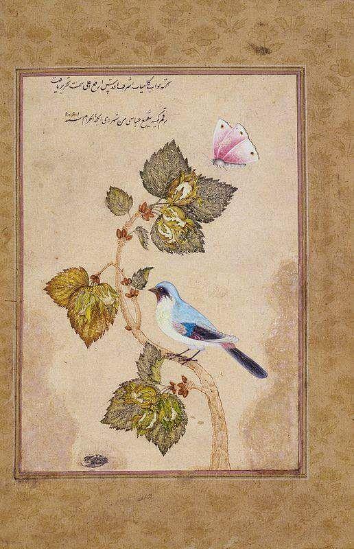 Kelebek Kuş Fındık dalı...