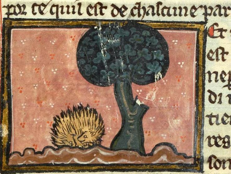 Medieval Hedgehog