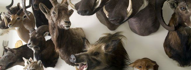Taxidermiste