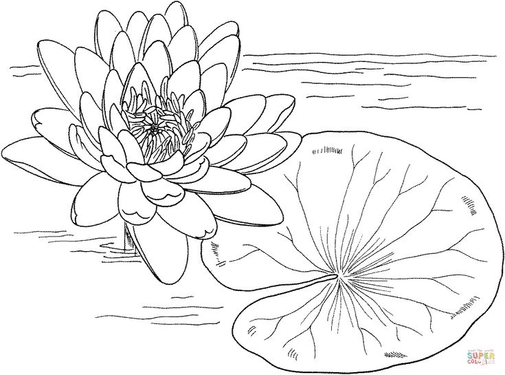 nymphaea mexicana or yellow water lily coloring page from water lily category select from 25721 printable crafts of cartoons nature animals - Monet Coloring Pages Water Lilies