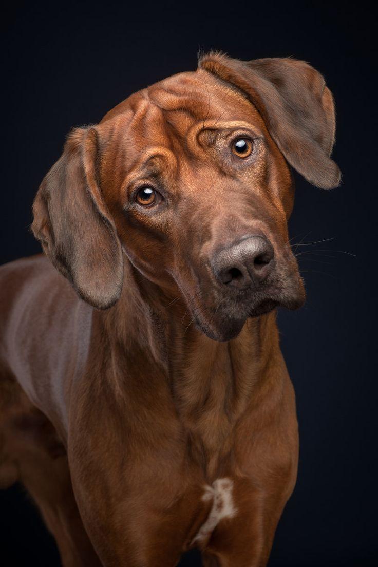 Machen Sie dieses Gesicht, wenn Sie versuchen, herauszufinden, was Sie tun. – alle T …   – Sweet Dogs