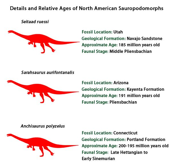 Comparing Three North American Members Of The Sauropodomorpha
