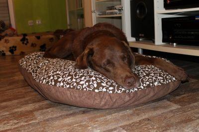 Elegante cuscino marrone fantasia per cani, colori e imbottitura naturali #CucciaCane #CaneCuccia #Cuccia #Cuscino #Cane http://www.principini.it/prodotti/cani/elegante-cuscino-marrone-fantasia-per-cani-colori-e-imbottitura-naturali