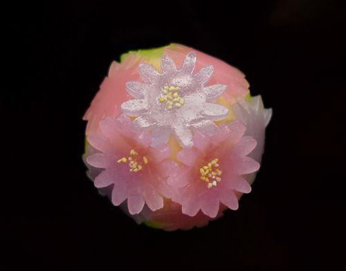Japanese Sweets, 二條若狭屋「都がさね」