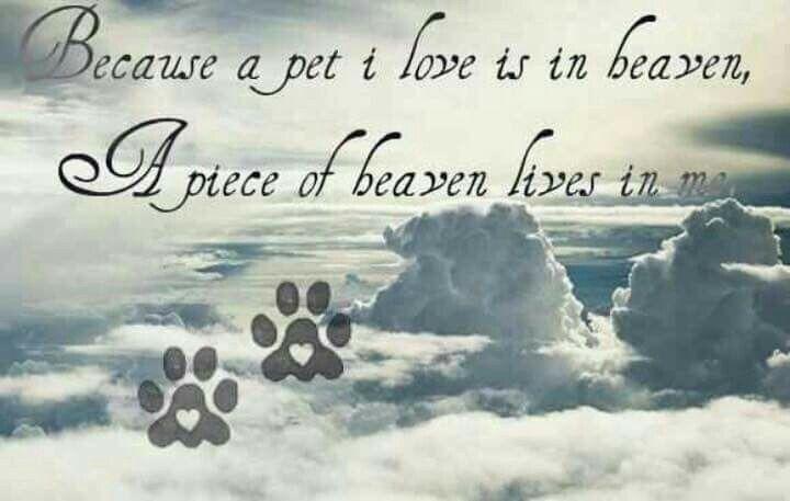 Sterkte bij het verlies van je hond ...