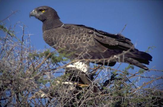 Какая самая большая птица на планете (в том числе хищная) - путеводитель