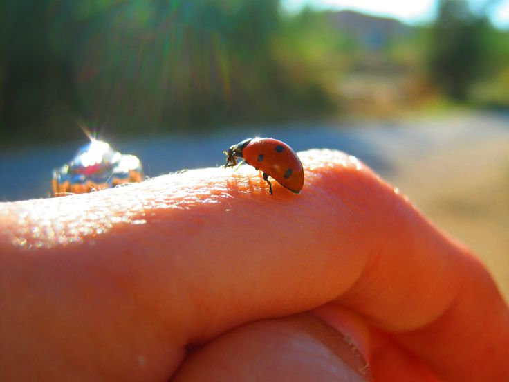 ladybird,.. :)
