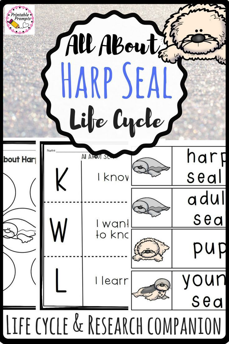 Your Kindergarten First And Second Grade Students Will Love Learning All About Harp Seals They Ll M Elementary Writing Activities Elementary Writing Harp Seal [ 1102 x 735 Pixel ]
