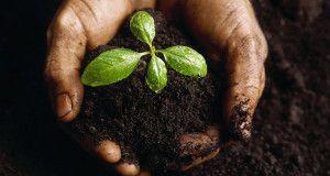 An Overcomer's Fertile Soil http://www.turningheartsministries.org