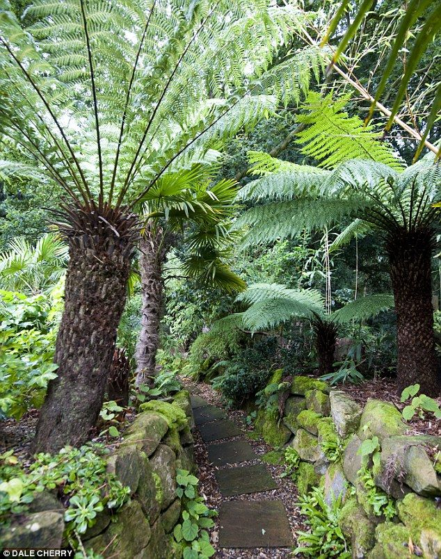 Jungle: The Suffolk garden has palm trees, paths and rare plants not usually found in the UK