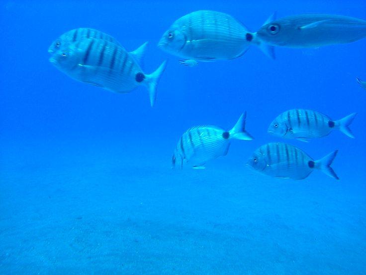 lanzarote under the sea