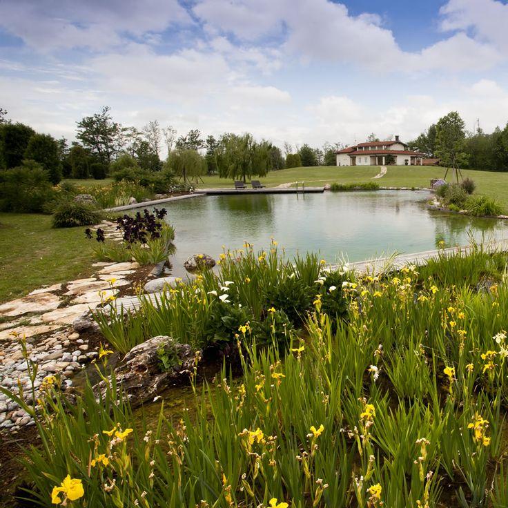 Oltre 25 fantastiche idee su piante acquatiche su pinterest for Teli laghetto giardino