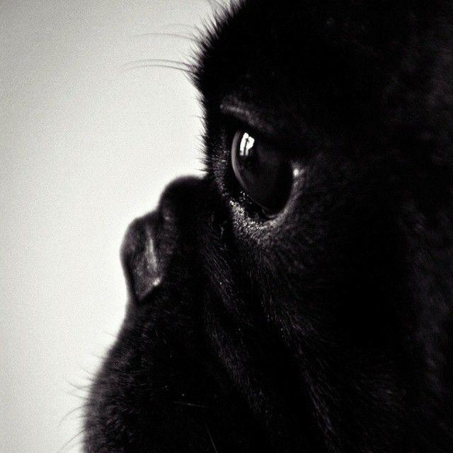 Mit Dieser Frage Plagt Sich Jeder Hundebesitzer Herum Neulinge
