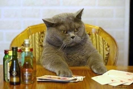 """""""吾輩は猫である。  名前はロック、いま全てのカルカンを掛けて勝負に出たことを後悔してる…"""""""