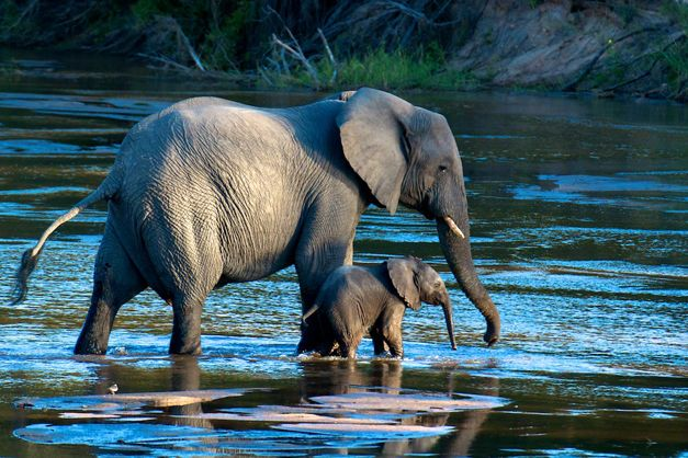 NUMBER 7: This elephant mother and baby by Doug Croft was captured in July 2012, with Gary Hill as ranger (and Stu Porter with Wild4 Safaris).