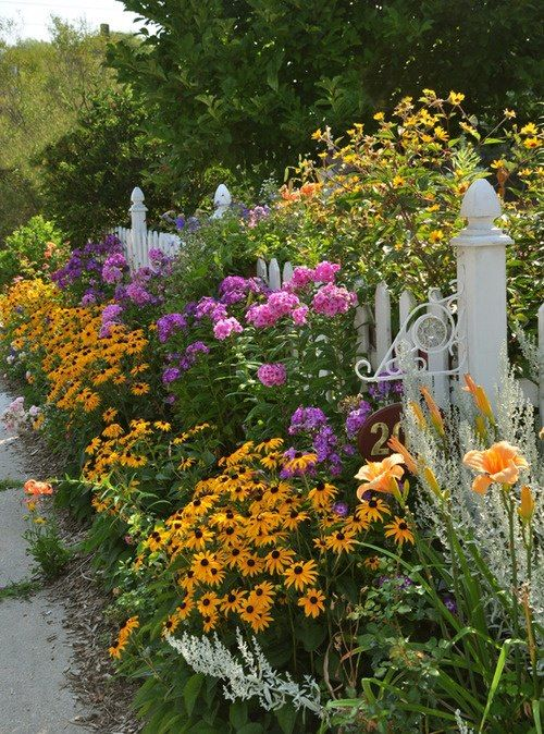 beautiful perennials along white picket fence