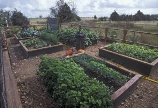 Fall vegetable planting guide for Texas