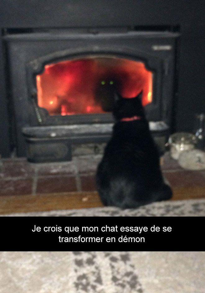 Voici les 20 Snapchat de chats les plus drôles de tous les temps