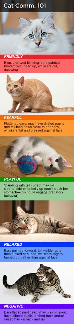 Read your cat's body language with this helpful chart.  For more tips visit the Dollar General Pet Center brought to you by Purina®