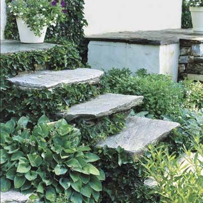 "Float Steps on Foliage  Make steps ""float"" by hiding their risers behind a thick carpet of foliage. Try Boston ivy; its clinging tendrils make it easy to train and keep trimmed to prevent tripping, and its green leaves turn a rich reddish-purple in the fall."