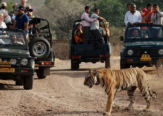 Tiger Safari Ranthambore