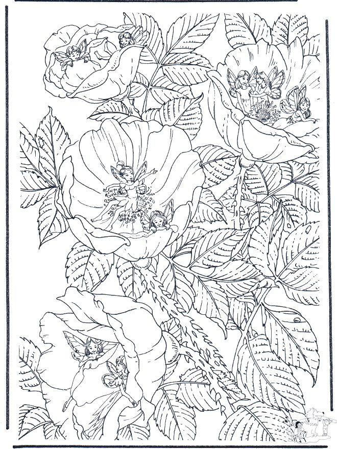 91 best images about coloring pages fairies on pinterest flower fairies coloring and print