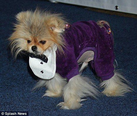 Jiggy Lisa S Dog