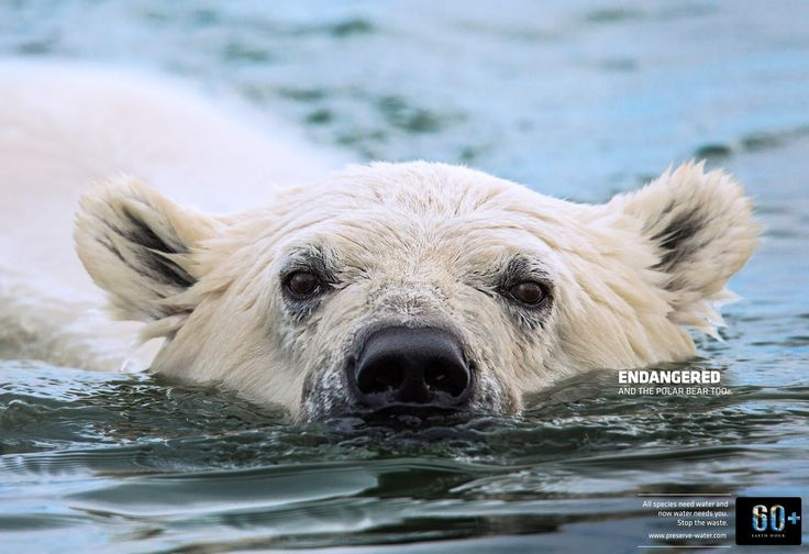 Read more: https://www.luerzersarchive.com/en/magazine/print-detail/earth-hour-60051.html Earth Hour Endangered. And the polar bear too. Water is responsible for giving life and we are responsible for saving its own. Stop the waste. Campaign for a project initiated by the Tags: Publimark Mullen Lowe, San Jose,Franklin Guevara,Felipe De La Parra,Esteban Mata Bustamante,Earth Hour,JM Champion,Javier Zeledon,Victor Rosas,Fernando Solórzano