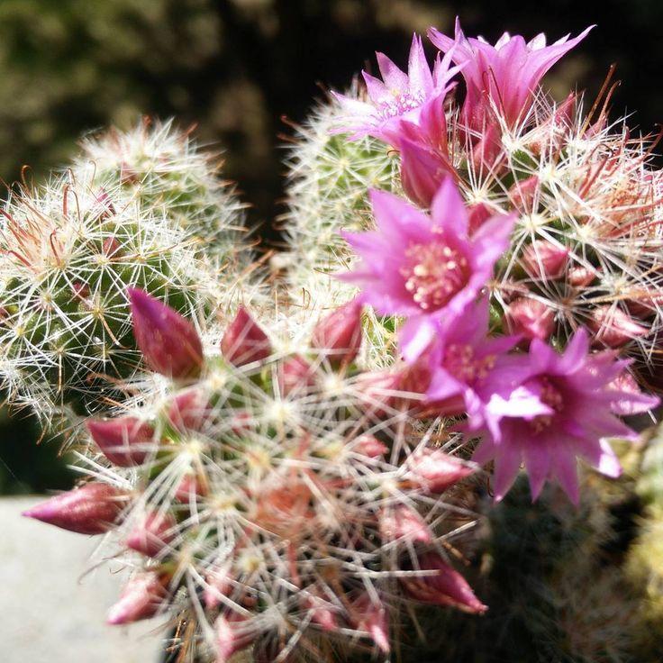 I fiori e la solitudine e la natura non ci deludono mai; non chiedono nulla e ci confortano sempre. (Stella Gibbons) flowerslovers http://gelinshop.com/ipost/1515251219740023714/?code=BUHQPTKFNui