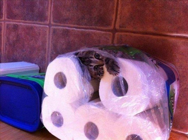 Toilet Paper Kitty  18 Hilarious Trapped Cats Who Need Human Help Right Now • Page 2 of 5 • BoredBug