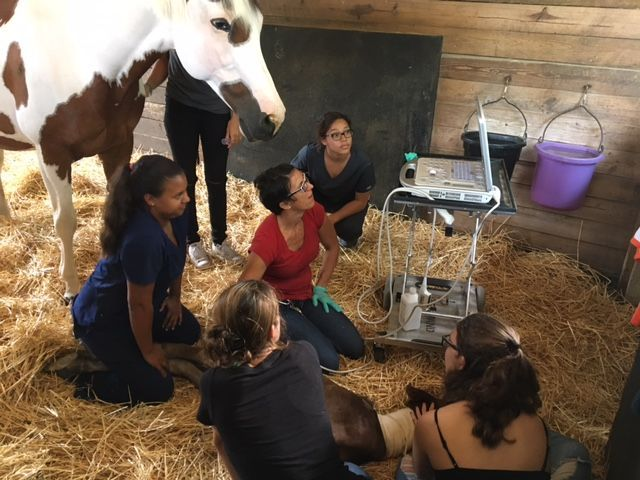 Wishes Granted was born to Lizzie on Tuesday, May 23, 2017 at 4:20 in the morning. Lizzie was artificially inseminated as part of the Vet Assist Program at West Broward High School in West Pembroke Pines. She was pregnant for a total of 372 days. (Normal gestation period for a horse is 11 months and 11 days.)Wishes Granted joined our world ...
