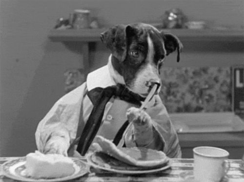 New trending GIF on Giphy. black and white dog breakfast pancakes butter dog human dogville comedies. Follow Me CooliPhone6Case on Twitter Facebook Google Instagram LinkedIn Blogger Tumblr Youtube