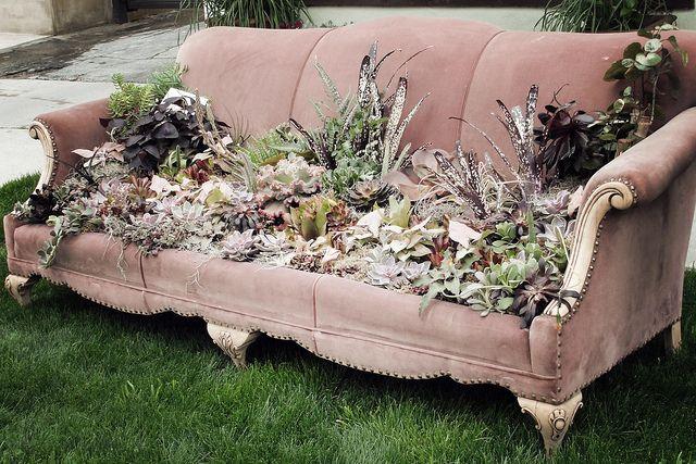 succulent couch...