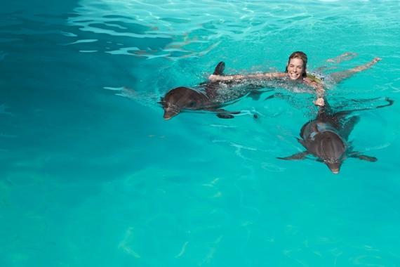 Nager avec des dauphins :)