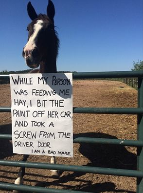 11 Horses That Are Not Sorry for What They've Done  http://www.horsecollaborative.com/11-horses-that-are-not-sorry-for-what-theyve-done/?awt_l=EsPxA&awt_m=3k.bA8UkibSVuCR&email=tufia@earthlink.net&utm_content=buffer4954b&utm_medium=social&utm_source=pinterest.com&utm_campaign=buffer