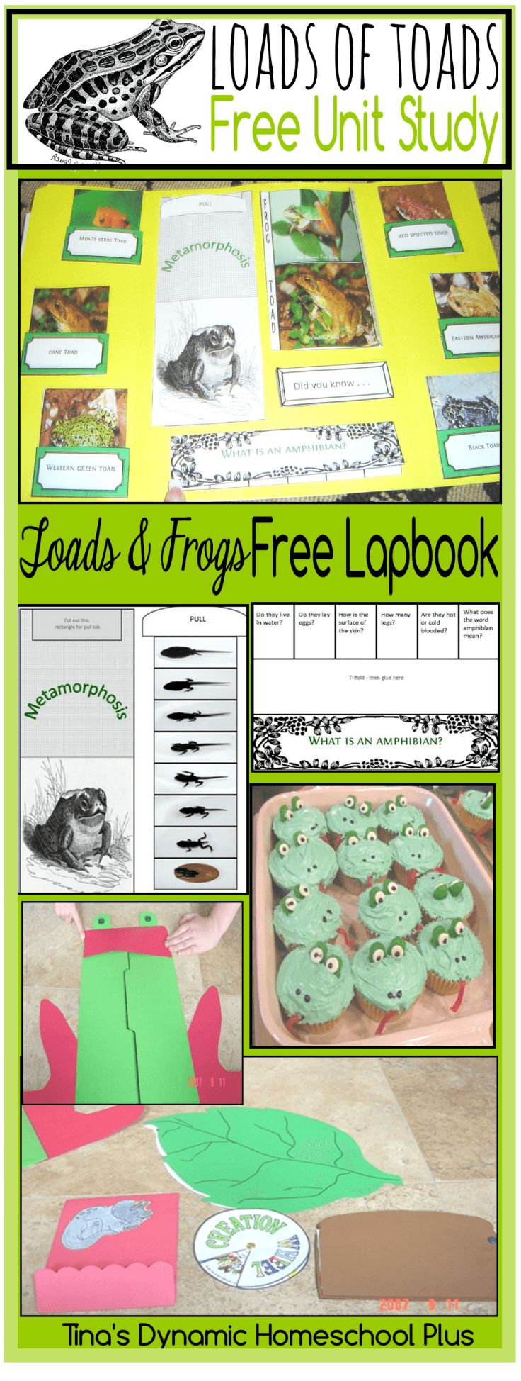 Free Frogs and Toads Unit Study and Lapbook @ Tina's Dynamic Homeschool Plus