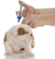 Find out if this injectable heartworm prevention drug is safe for dogs.