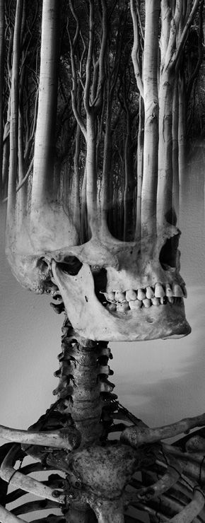 Antonio Mora   art   black & white   skull   trees   quirky   different   dark   moody   bones   earth   forest   mind