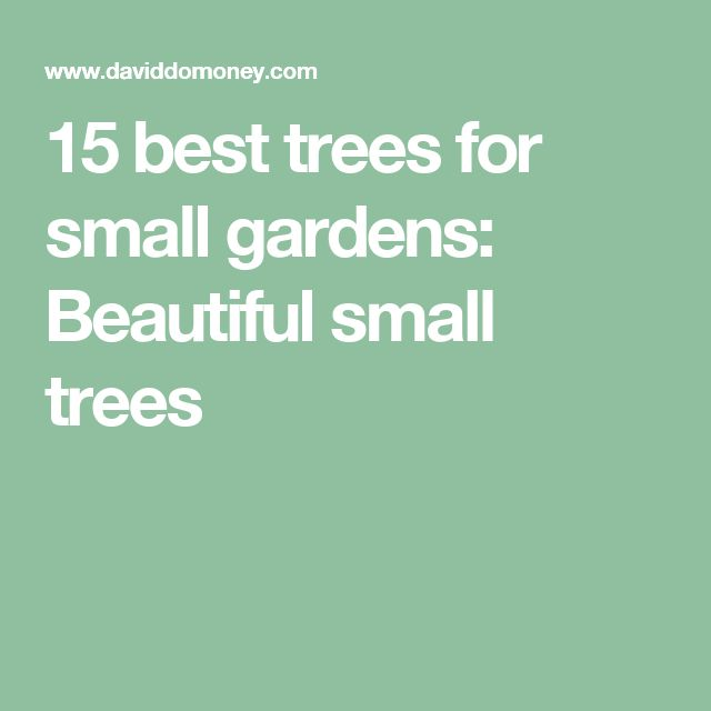 15 best trees for small gardens: Beautiful small trees