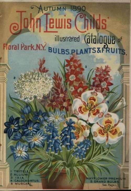 Front cover of John Lewis Childs' Autumn 1890 illustrated catalogue of bulbs, plants and fruits with an illustration of Triteleia, Allium, Ixia, Calochortus, Muscari.  John Lewis Childs. Floral Parl, N.Y.