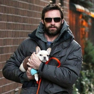 Hugh Jackman with a French bulldog? Love