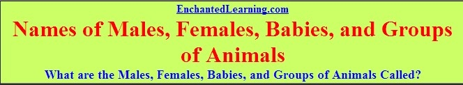 Names of Males, Females, Babies, and Groups of Animals