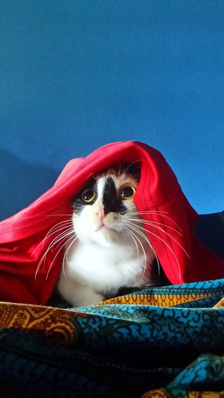 Help me Obi Wan Cat-nobi. You're my only hope. http://ift.tt/2tk8IQM