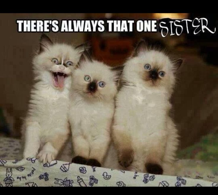 Funny Meme Sister : There s one crazy sister in the bunch quotes