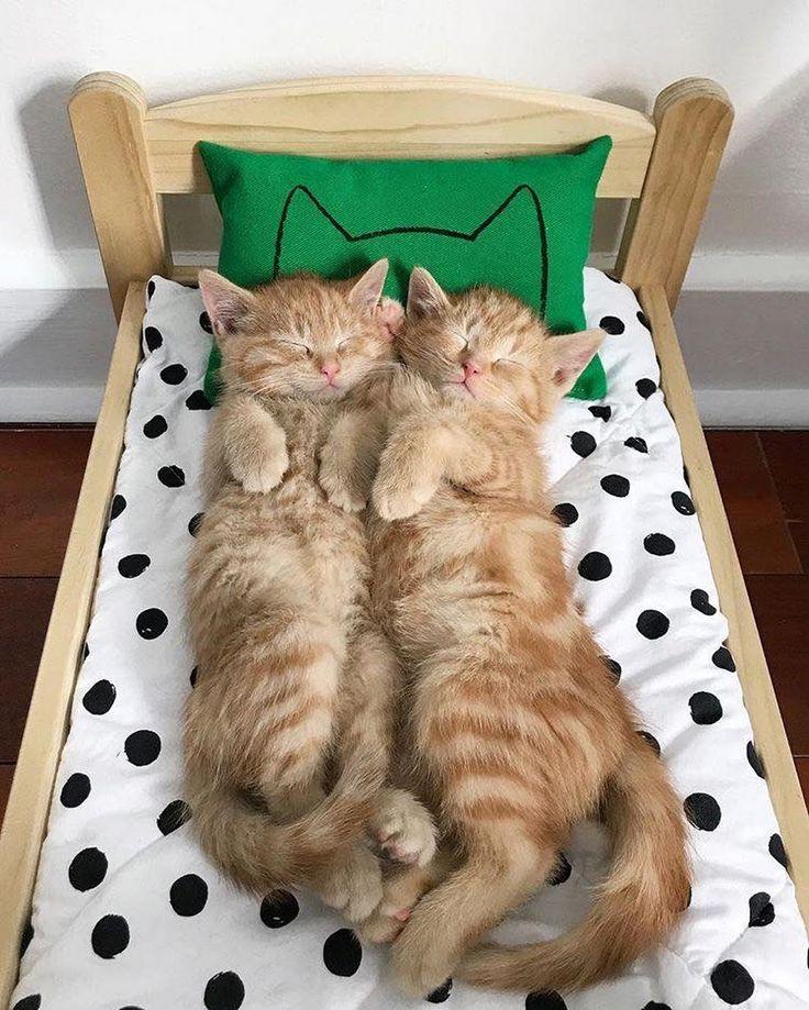 Котята картинки приколы