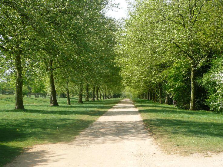 Avenue besides the ha-ha (3072×2304)