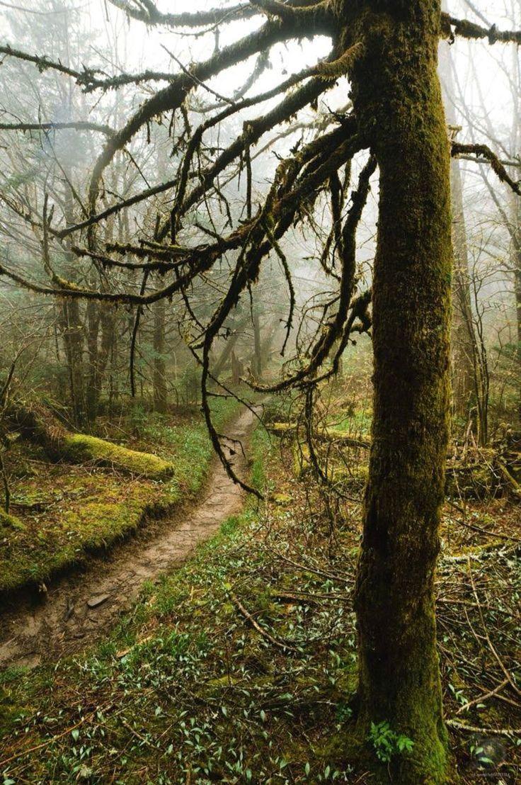 Тропа в национальном парке Грейт-Смоки-Маунтинс, США