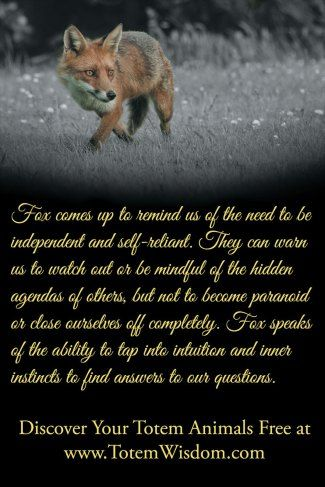 the fox is adaptable, independent, and extremely clever - such a great teacher.